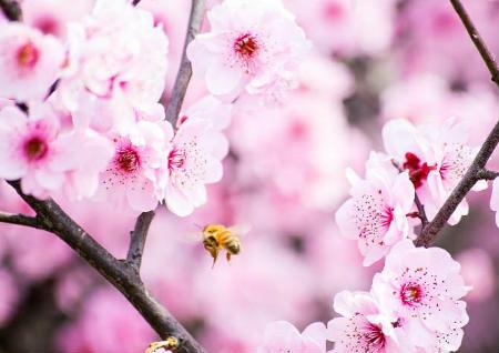 家居风水桃花位在哪