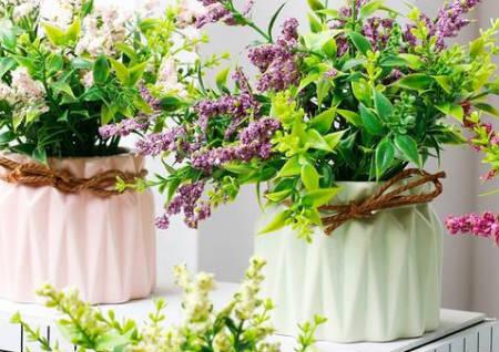 窗台适合摆什么植物