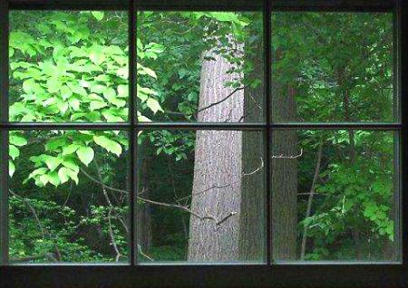 窗前有树的风水怎么样