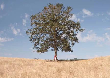 坟地种树有什么讲究