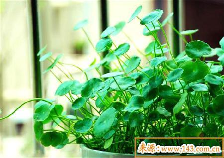 风水上卧室适合放什么植物