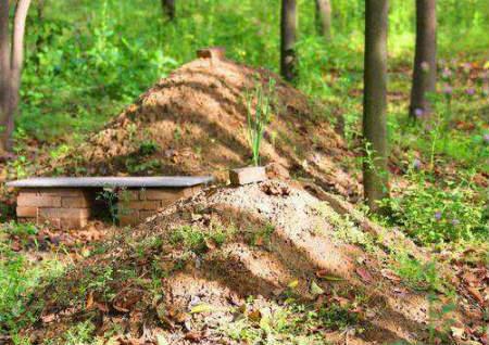 坟墓周围长树风水好不好