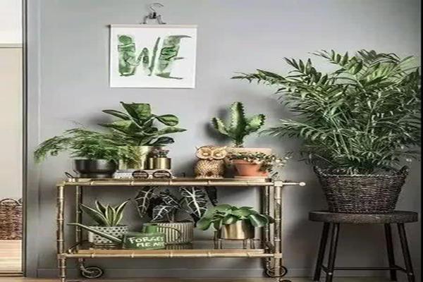 你家的盆栽放对位置了吗