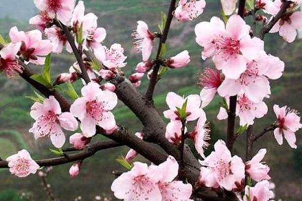 八字命理中的19种桃花