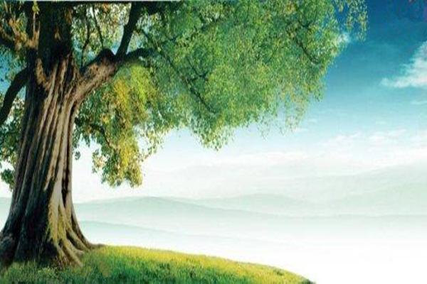 十天干之甲木生于各月取用详解