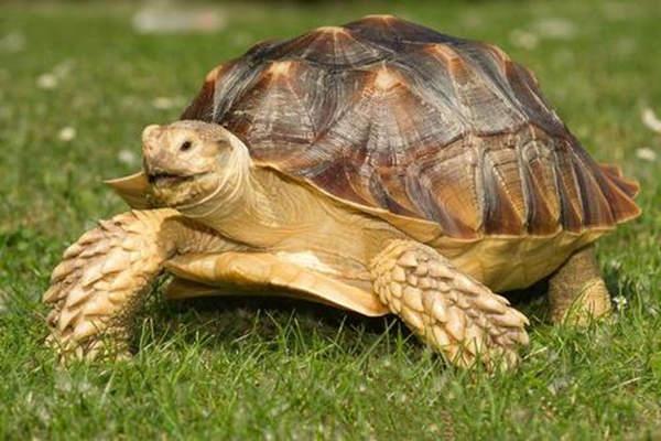 居家养龟的风水讲究