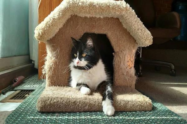 家中这些方位不宜安置宠物