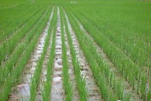 八字湿土与燥土的组合运用