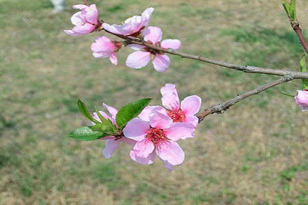命带桃花的人适合干哪些职业