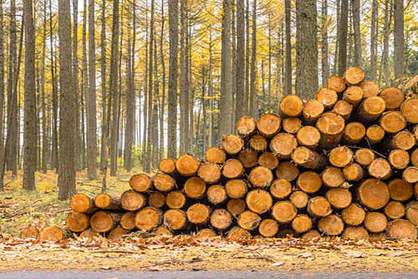 八字五行死木与活木的断法